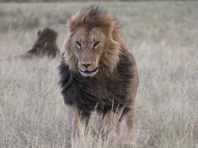 lion-3737721_640